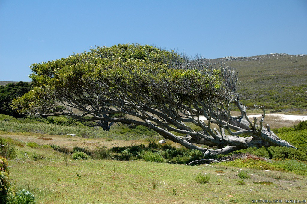 Table Mountain National Park, Jan 2008